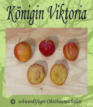 Ihr Obstbaum-Shop! Alte Obstsorten - Alte Apfelsorten