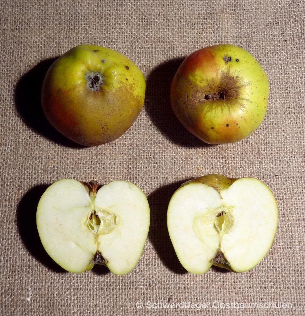 Ihr Obstbaum-Shop! Alte Obstsorten - Alte Apfelsorten - www.alte ...