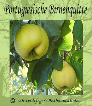 portugiesische birnenquitte