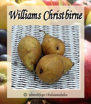 "Birnenbaum, Herbstbirne ""Williams Christ"""